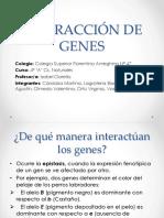 Interacción de Genes