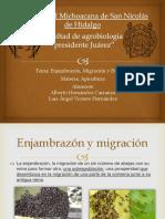Apicultura. Enjambrazon, Migracion y Evasión