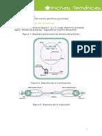 Actividad Sintesis de Proteinas_Estudiante