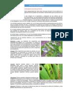 Factores Bioticos y Su Influencia en Los Cultivos