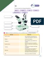 Microscopio Practica