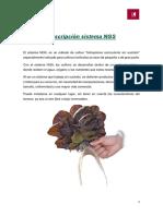 Descripción del sistema de cultivo hidroponico NGS