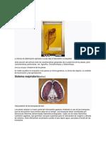 Anatomía de Peces