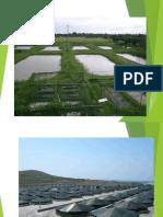 Calidad de Agua y Preparacion de Estanques