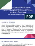 proyecto micro.pdf