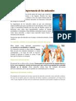 La Importancia de Los Músculos