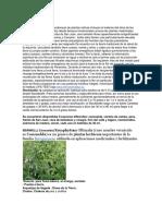9 flores para el alma 2.pdf