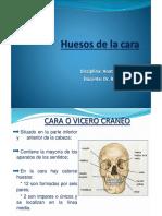 Huesos de La Cara Diapo