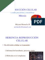 6. Division Celular 1