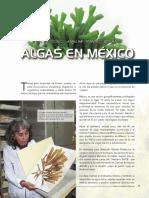Algas Mexico