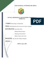 INFORME P .2
