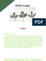 Alfalfa Moapa