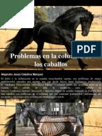 Alejandro Jesús Ceballos Marquez - Problemas en La Columna de LosCaballos