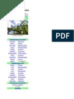 Fenomenologia Del Carciofo Wiki