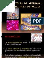 5.- Potenciales de Membrana y Potenciales de Accion
