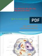 Biochemical Process (Matrikulasi)