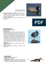 Aves Fauna