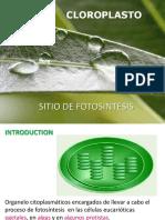 Fisiología de los cloroplastos y fotosíntesis