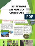 Eco Sistem