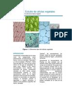 Práctica 1. Reconocimiento de La Celulas Vegetales.
