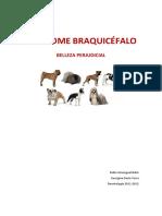 BRAQUICEFALIA
