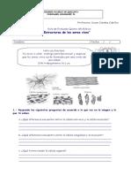 135334083-Guia-de-Celulas-5-Basico.pdf
