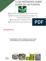 Clase 4 Efectos Sobre Fisiologia de Plantas