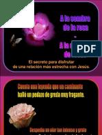 1 - JESÚS - Seguir a Jesús - A la sombra de la rosa (Tommy's).pps