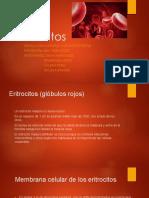 Equpo 4 Eritrocitos 19-3