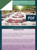Exportación de Uva Peruana a China