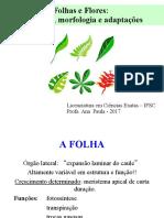 aula 8 folhas flor.pdf