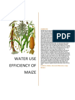 Water Use Efficiency of Maize