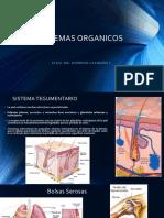 4 Sistemas Organicos