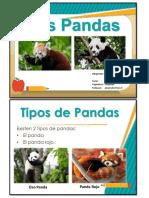 Panda rojo y panda gigante