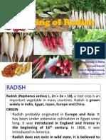 11. Radish
