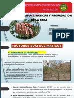 Factores Edafoclimaticas de La Tara