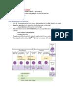 Thymus Independent Antigen