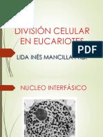 DIVISIÓN CELULAR EN EUCARIOTES clase.pptx