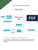 Estructura Del ADN Sara Chacon