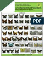 Poster Mariposas Cerro Verde[1]
