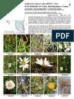 Field Guides Peru Plants of Tanta Huachipampa Tomas
