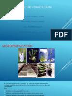 Micropropagacion-pptx