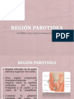 Region Parotidea