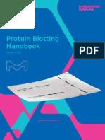 protein blooting handbook