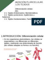 T3.Los tejidos (1)