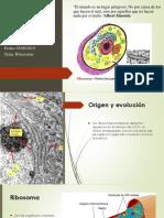 Presentación de Ribosomas (1).pptx