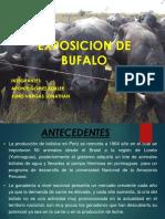 Bufalos de Bufon