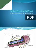 Estructura Celular Bacteriana