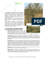 136131696-La-Verticilliose.pdf