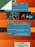 Clase 7 Ribosomas y Otros - Fotosíntesis